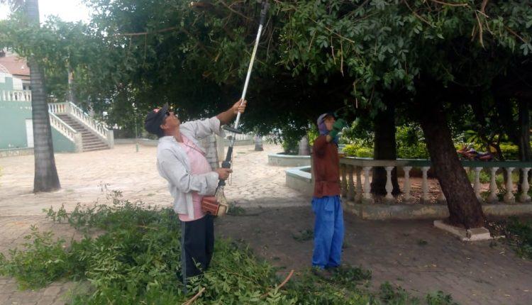 Prefeitura realiza serviço de poda de árvores na sede de Caetité