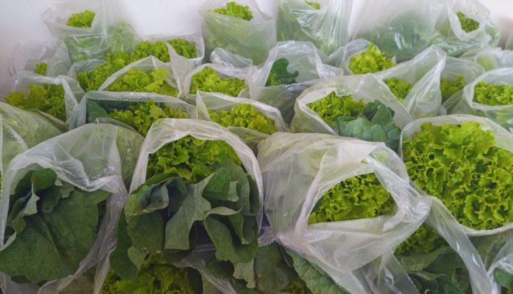 CRAS Urbano doa verduras do Horto Municipal para famílias referenciadas no órgão